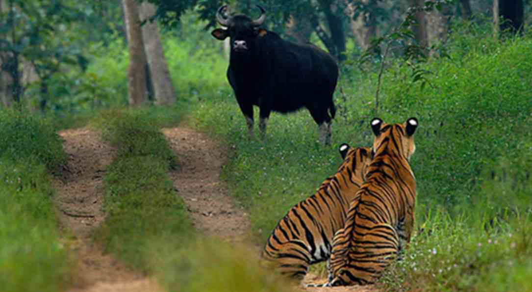 Bhadra Wildlife Sanctuary - 32 KM